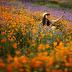 Польові квіти південної Каліфорнії