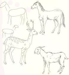 step easy animal outline drawing horse deer goat