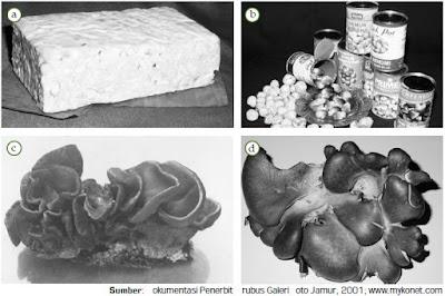 Peranan dan Manfaat Jamur atau Fungi yang Terdapat dalam Jamur Shitake, Jamur Kuping, dan Jamur Merang Bagi Kehidupan Manusia