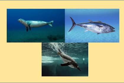 (2) Animalia (Campbell Jilid 3)