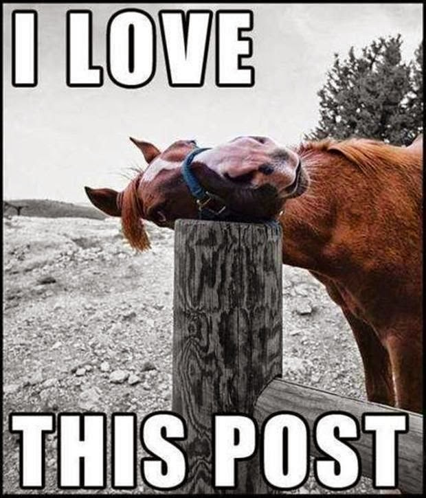 Funny Horse I Love This Post Joke Picture
