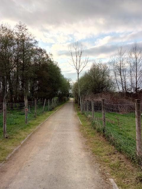 Camino de Aliseda pantanosa