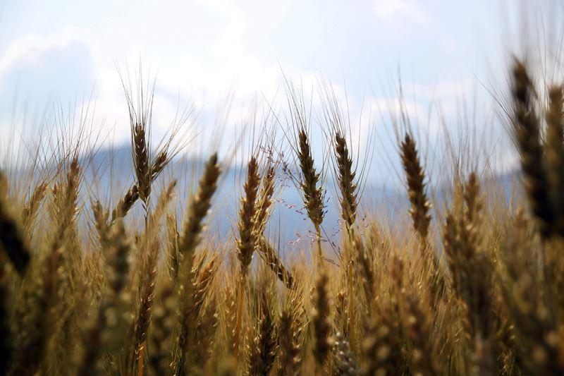 25 yılda Konya büyüklüğünde tarım alanını kaybettik