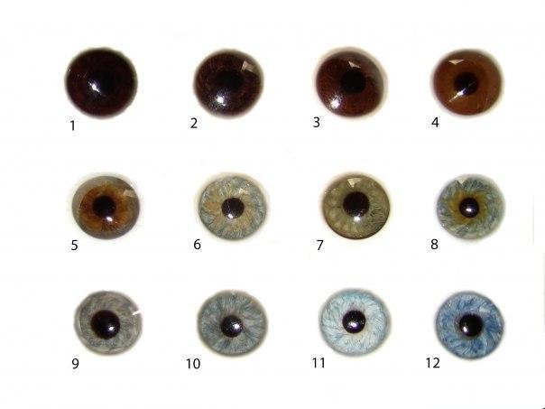 Присутствия трех цветов глаз фото и описание над