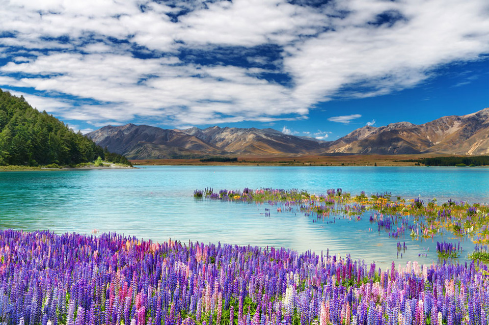 37 Awesome Things to do in New Zealand 2020