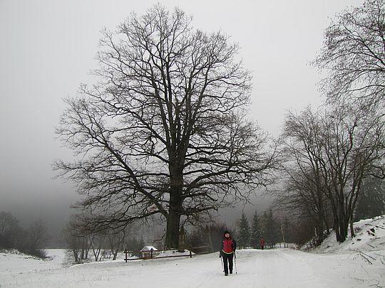 Początek drogi w górę doliny potoku Czorne.