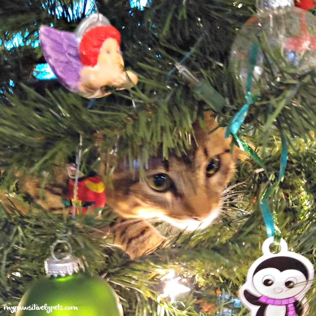 Kitten's First Christmas Tree | Pawsitively Pets