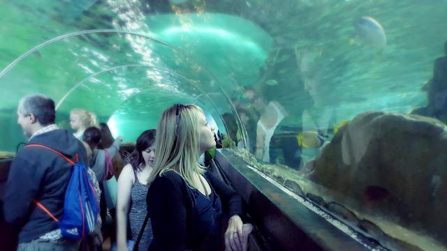 Glass Viewing Tunnel - Brighton Sea Life Centre