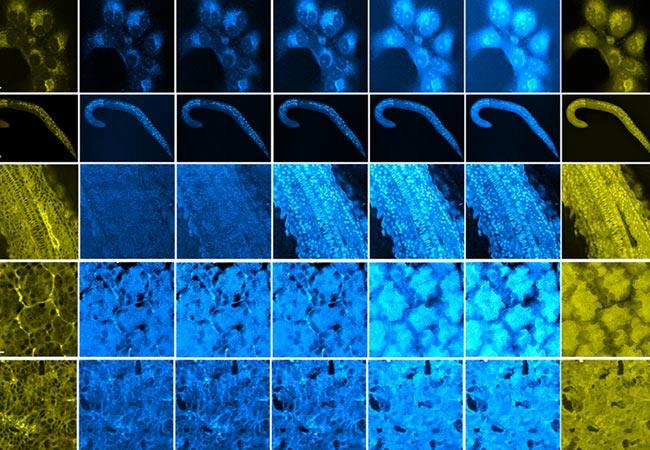 Penelitian Optical imaging of metabolic dynamics in animals