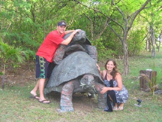 Turtle funny - photo#40