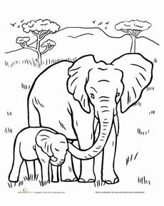 Realistic African Elephant Coloring Sheet