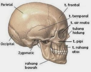 Bones Latin 12