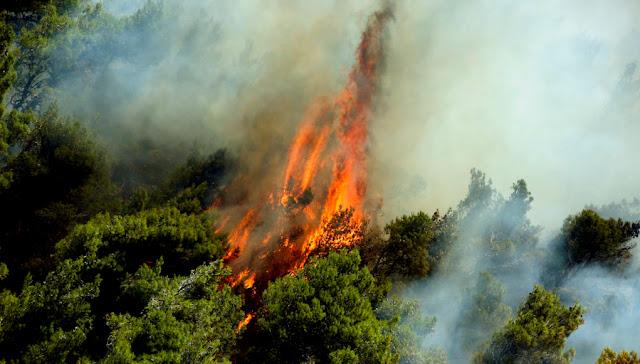 Θεσπρωτία: Aν και ήταν απειλητική η φωτιά στη Σκορπιώνα Θεσπρωτίας, οι έμπειροι πυροσβέστες την έλεγξαν γρήγορα...