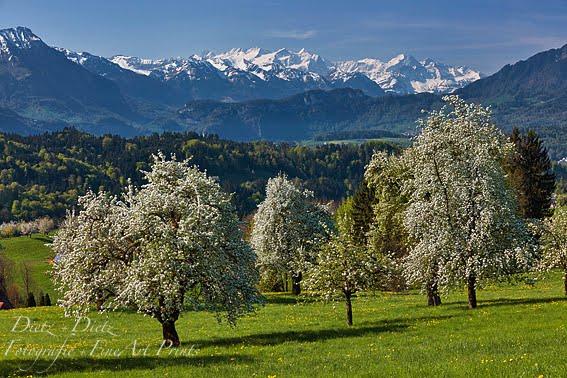 Berner Alpen, Adligenswil (LU) - 21.04.2018