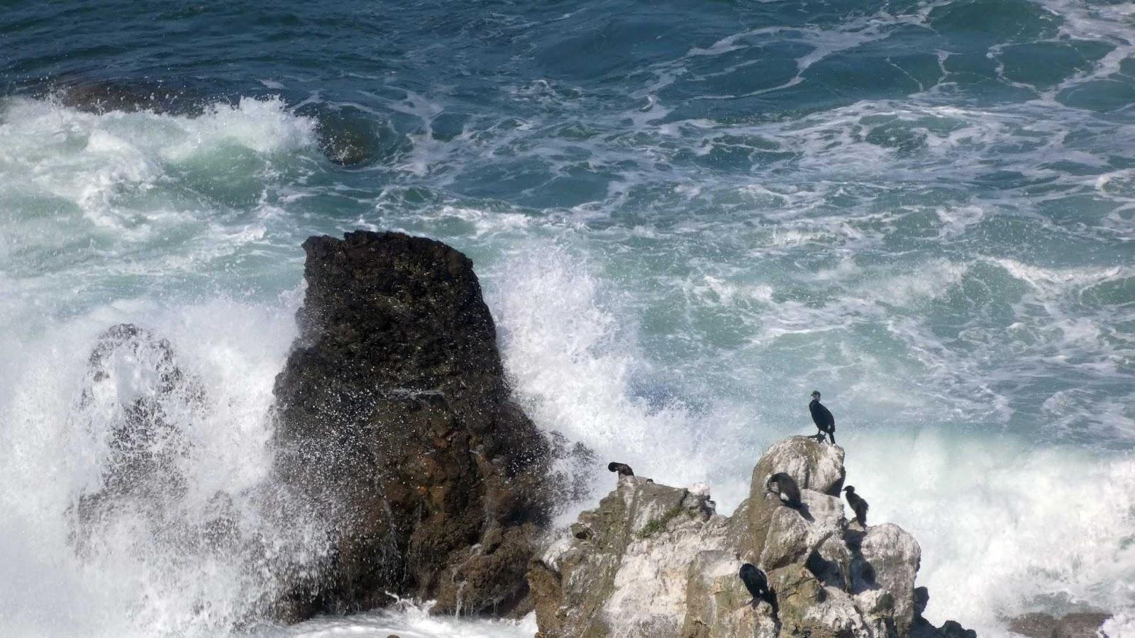 cormoranes