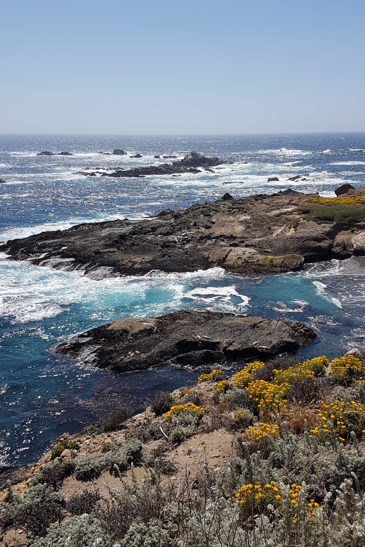 Travel: california roadtrip - point lobos