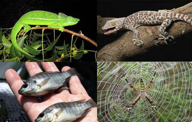 Contoh Hewan Insektivora