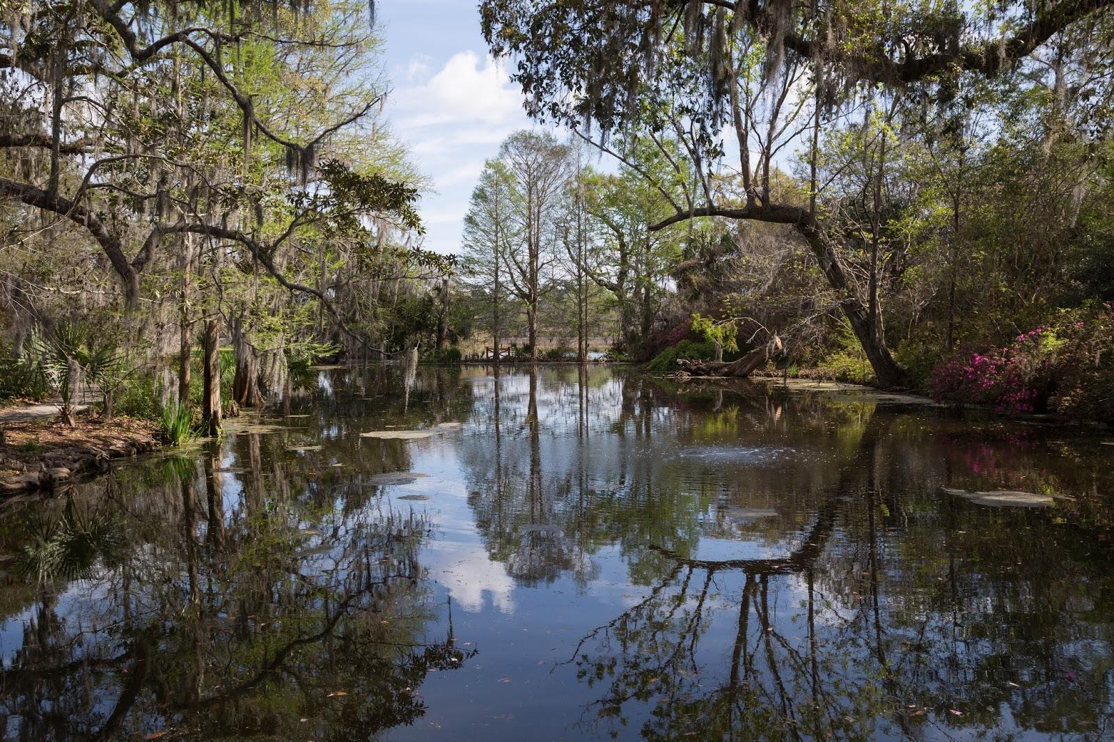 Charleston Daily Photo: Swamp Walking - Magnolia Plantation