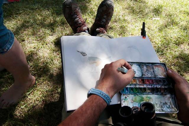 taller de ilustración científica y pintura naturalista en Sierra de Andújar, Diego Ortega Alonso