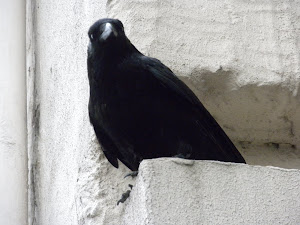 Crow In Paris