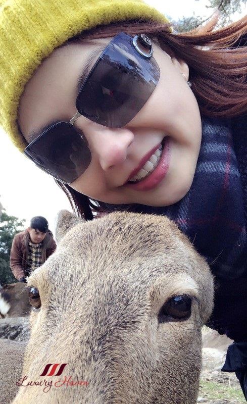 osaka nara park instagram worthy spot with deer