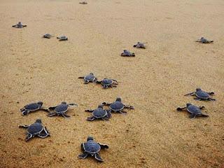 wisata pantai banyuwangi