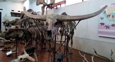 Wisata Edukasi Museum geologi
