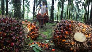 Kampanye Hitam Minyak Sawit Ancam Kedaulatan Indonesia