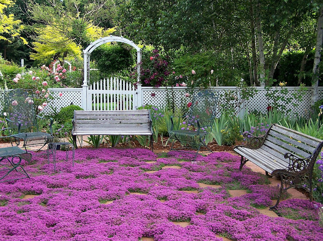 lanscaping non grass lawn ideas with violet thyme ground