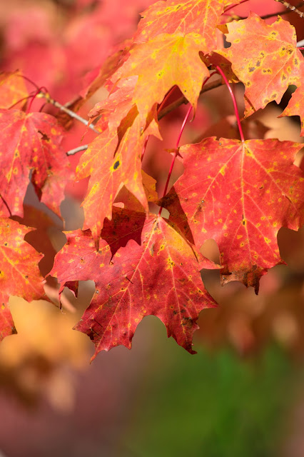 Foliage-Jackson falls