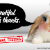 Let's talk about.... Animal Testing!!!