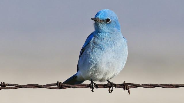 Наполняем твиттер содержанием