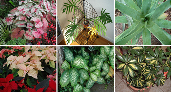 Top 10 DEADLY Plants You Should Remove From Your Home Immediately- To Save Your Family's Life!