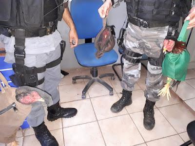 IMG 20180121 WA0512 - Polícia Militar fecha em Barra do Corda RINHA onde ocorria brigas de galos - minuto barra