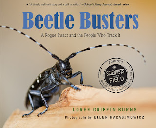 Review of Beetle Busters by Loree Griffin Burns