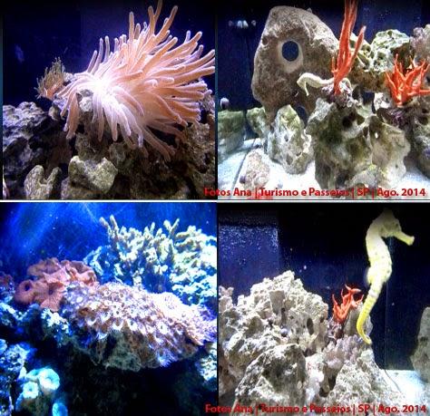 Cavalo marinho, anemonas e corais