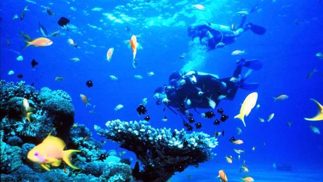 ท่องเที่ยว, แนวหินปะการัง, มัลดีฟส์, สถานที่ดำน้ำ, สถานดำน้ำทั่วโลก, อันดับสถานที่ดำน้ำ, ราสโมฮัมเหม็ด ทะเลแดง อียิปต์ (Ras Mohammed, The Red Sea, Egypt)