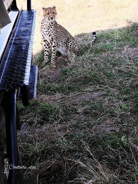 dzikie zwierzęta, safari
