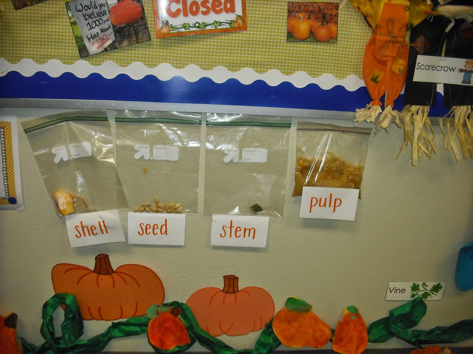Parts Of A Pumpkin Diagram Horsetail Plant Sprinkles To Kindergarten Playful Little Pumpkins