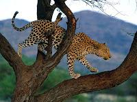 Leopard Puzzle