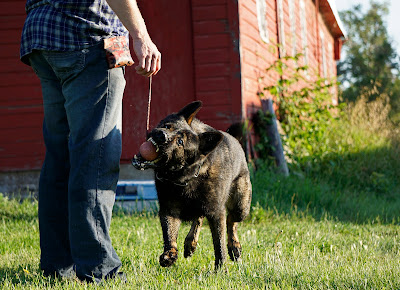 Secrets for German Shepherd Training Not to Bite