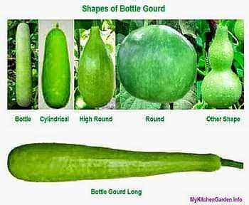 Shapes of Bottle Gourd