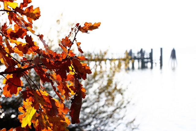 Eichenblätter am Ammersee im Herbst