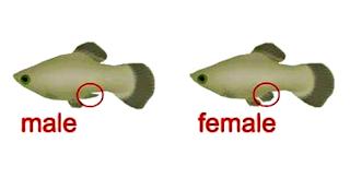 Perbedaan antara jantan dan betina