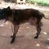 Ιωάννινα:Πρόστιμο 1.500 ευρώ σε ιδιοκτήτη σκύλου ...