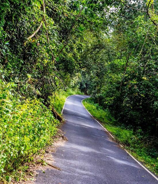 Way to Athirapally from Valparai