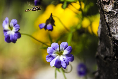La Campana Flora