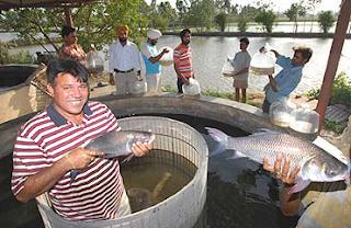 Fish Farming gets a Boost in Punjab