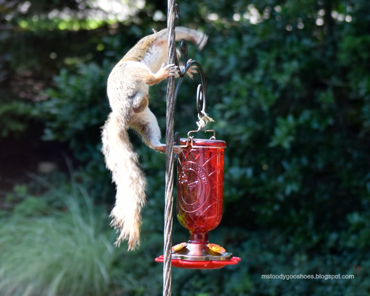 Olympic Squirrel Gymnastics | Ms. Toody Goo Shoes