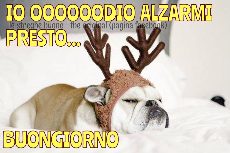 funny christmas bulldog - photo #8